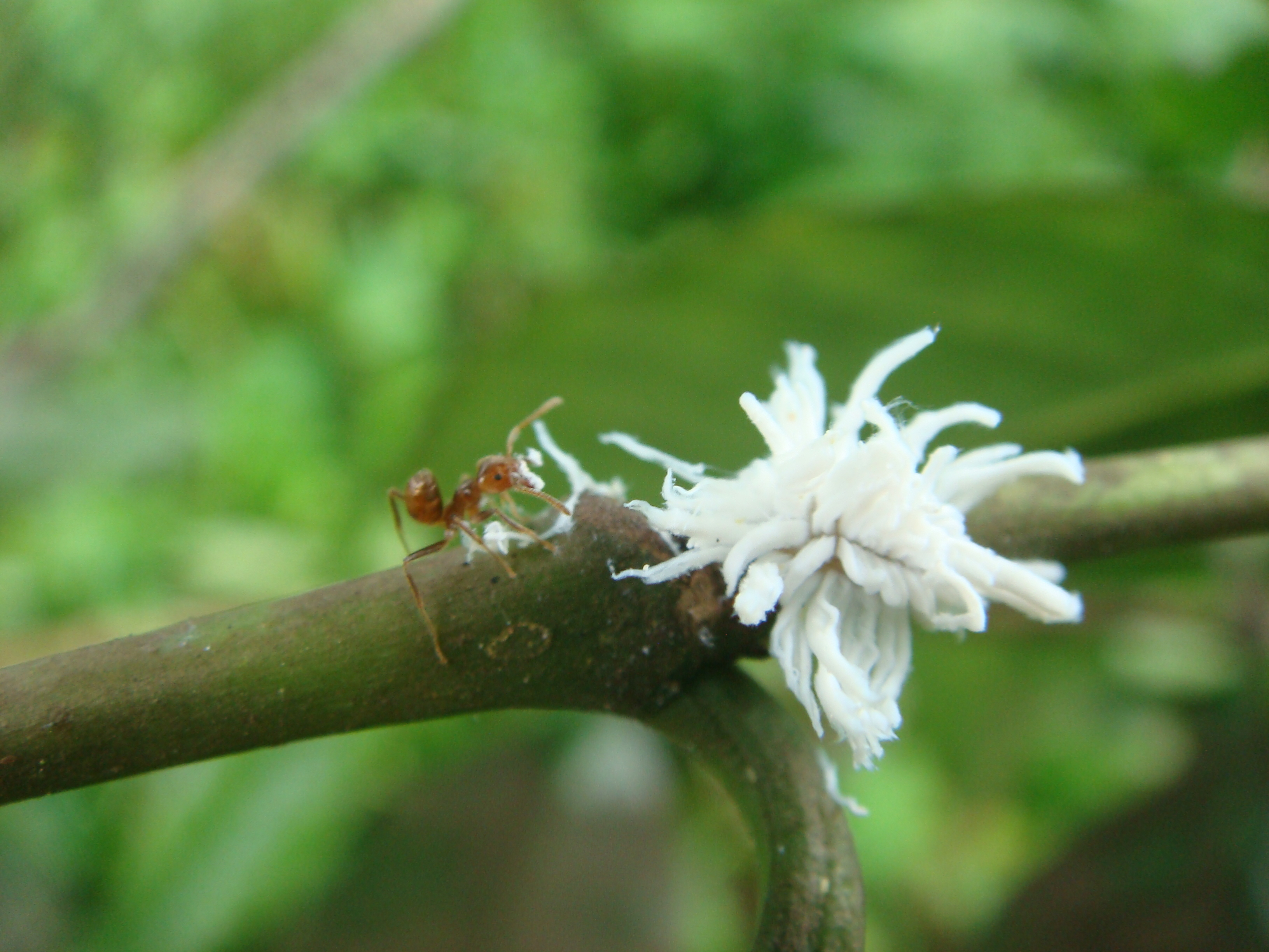 how to get rid of indian stick insect eggs