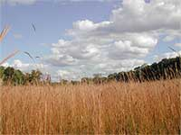 Prairie at Alex Dow Field, Nichols Arboretum. Photo courtesy U-M Matthaei Botanical Gardens & Nichols Arboretum